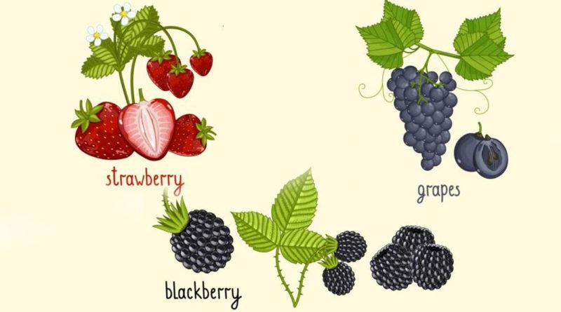 Antioxidanții esențiali în îngrijirea tegumentelor