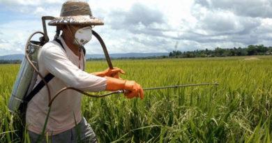 Studiu: care sunt riscurile expunerii la pesticide