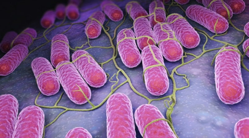 O bacterie interstinală, protecție împotriva infecției cu Salmonella