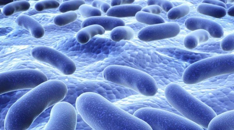 Probioticele, efecte demonstrate asupra unui organ vital