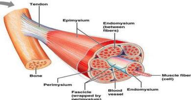 Cercetătorii încearcă să descopere remedii pentru distrofia musculară