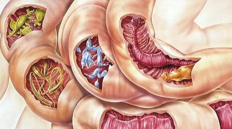 Cercetătorii continuă lupta împotriva paraziților intestinali