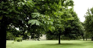 Locuiești în apropierea spațiilor verzi? Iată ce beneficiu poate avea acest lucru asupra sănătății tale!