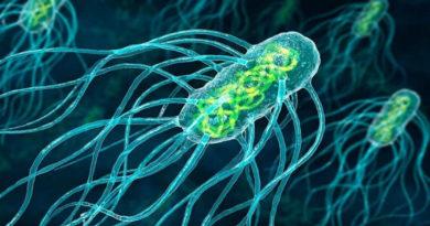 O nouă specie de bacterii poate inhiba dezvoltarea celor mai rezistenţi agenți patogeni