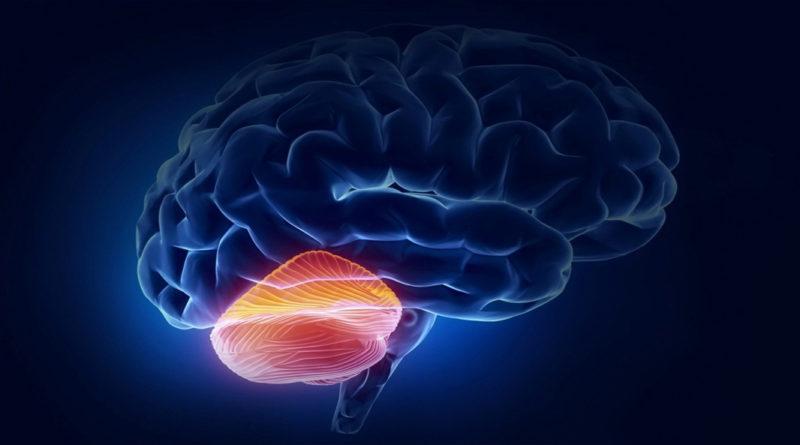 A fost descoperită o nouă funcție a cerebelului care poate ajuta la dezvoltarea de tratamente pentru bolile neurologice