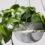 Plantele modificate genetic, mai eficiente decât un filtru de aer