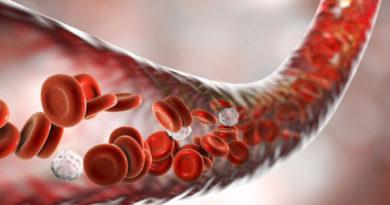 S-a descoperit ingredientul vital pentru formarea vaselor de sânge