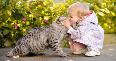 Atenție! Pisicile pot proteja copiii de astm, însă nu în toate situațiile