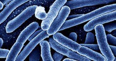 Cercetătorii au reușit să reproducă bacteria E. Coli prin rescrierea unui cod genetic