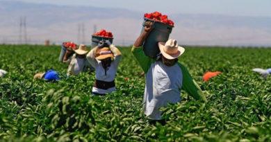 Un studiu recent arată că lucrătorii agricoli sunt predispuși unei afecțiuni de rinichi